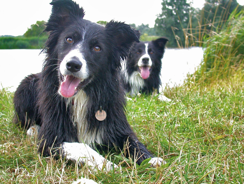 Waterpret honden uitlaten